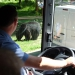 Sortie au parc zoologique de Thoiry