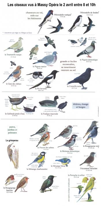 oiseaux 2016 web.jpg